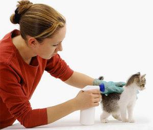 Профилактика возникновения кишечных паразитов у людей и животных